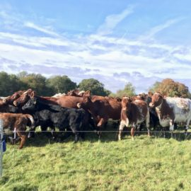 Pasture-fed livestock systems: sustainability starts with soil
