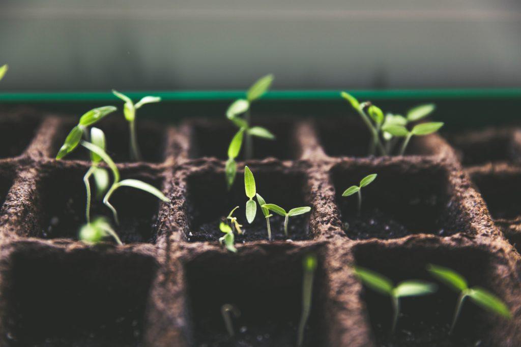 Seedlings -start your IFSTAL journey